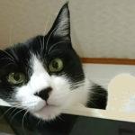 アトリエ執事・猫の海君